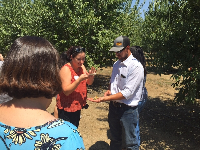 Capay Valley Ranch farm manager Joe Armstrong displays almonds for a food blogger to photograph.