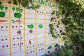 Garden plan mural at a UC Davis community garden
