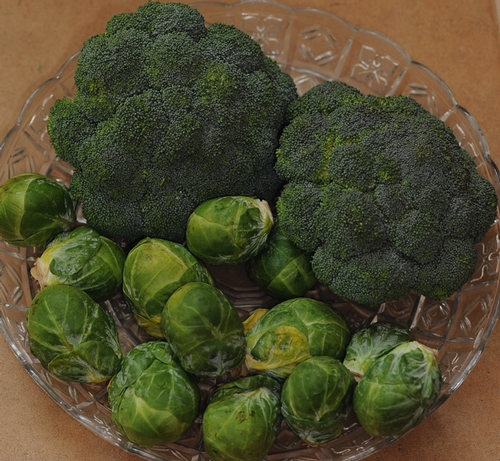 Broccoli and Brussels sprouts contain substances that can block the growth of cancer cells, according to newly published research in the journal Cancer Prevention Research. (Photo by Kathy Keatley Garvey)