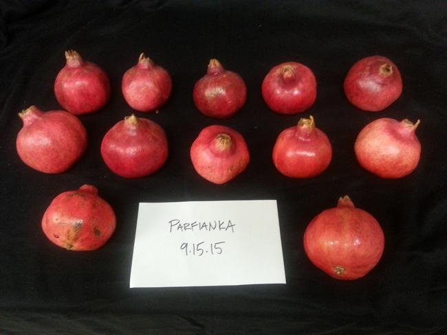 Parfianka