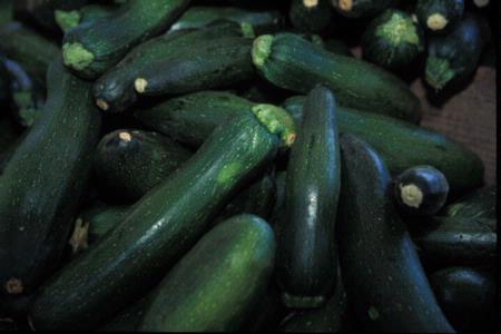 zucchini picked