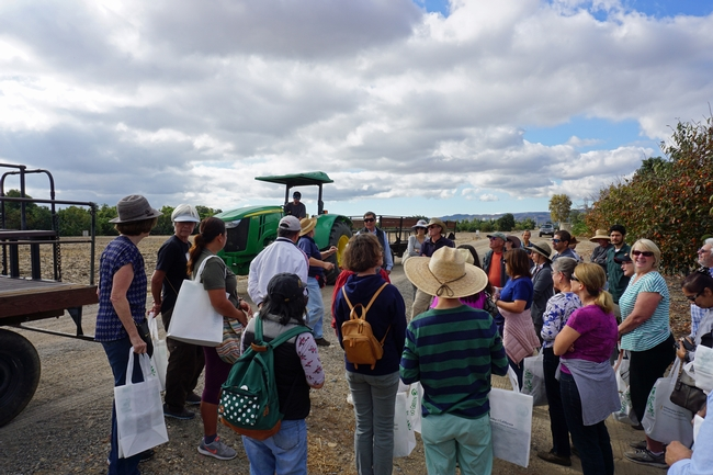 Visitors are briefed before entering the persimmon variety block to taste and harvest persimmons.