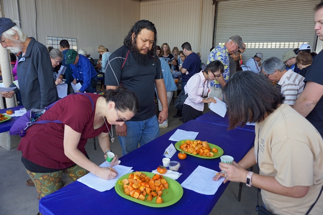 Participants evaluated persimmon varieties based on attractiveness, astringency, sugar, flavor and overall performance.