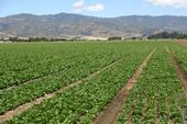 Lettuce grown in the Salinas Valley depends on nitrogen to grow.