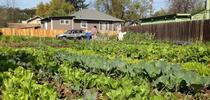 Sac urban farm for Food Blog Blog