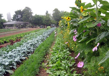The apprenticeship program takes place at UC Santa Cruz's farm and Chadwick Garden
