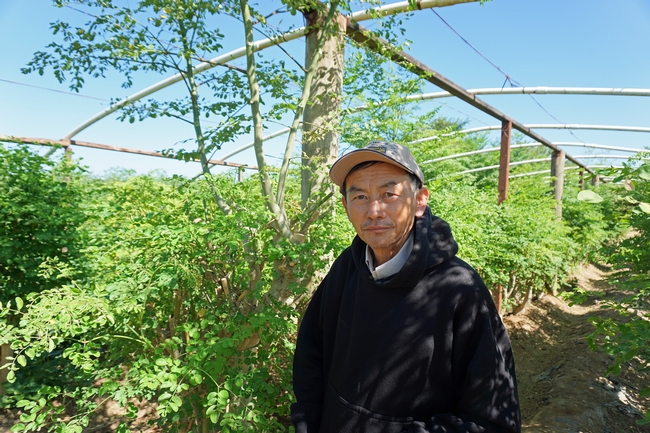 Fresno farmer Vang Thao in his moringa plantation.