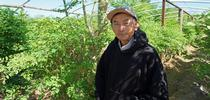 Fresno farmer Vang Thao in his moringa plantation. for Food Blog Blog