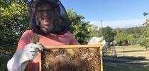 Jonathan Dear, a small animal internal medicine veterinarian and hobbyist beekeeper, holds a frame after inspecting a hive. for Food Blog Blog