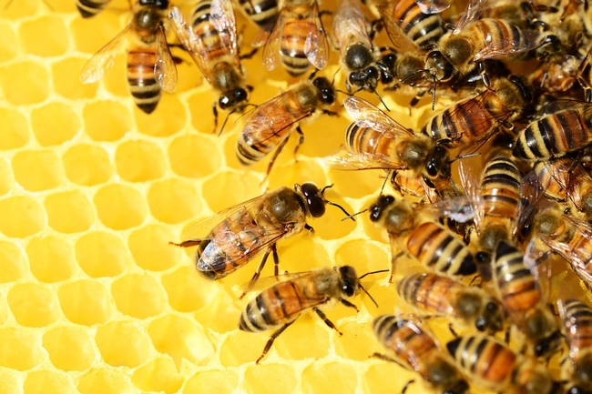 UCANR-Beehive