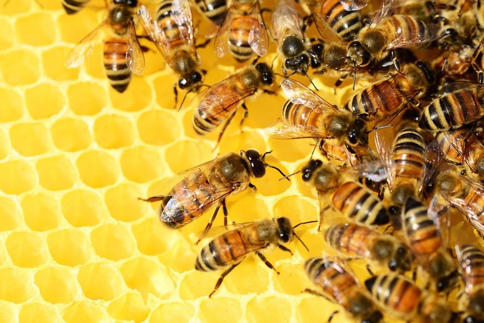 Honey bee health key to wellbeing of important species - Food Blog ...
