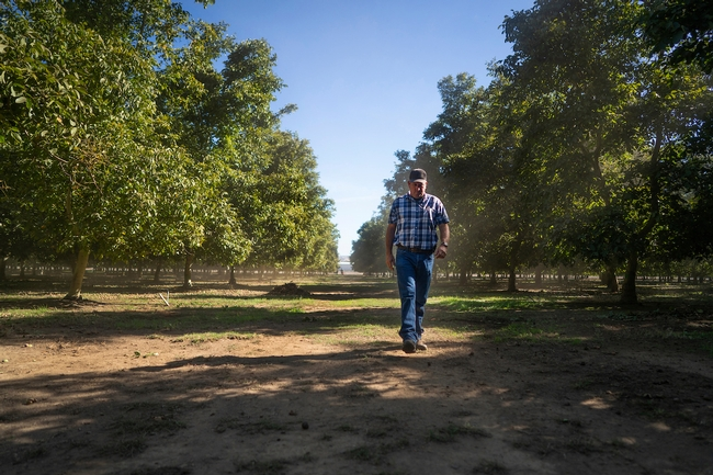 Hal Crain's family has been growing walnuts for 55 years. for Food Blog Blog