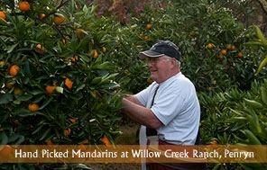 Willow Creek Orchard mandarin picker