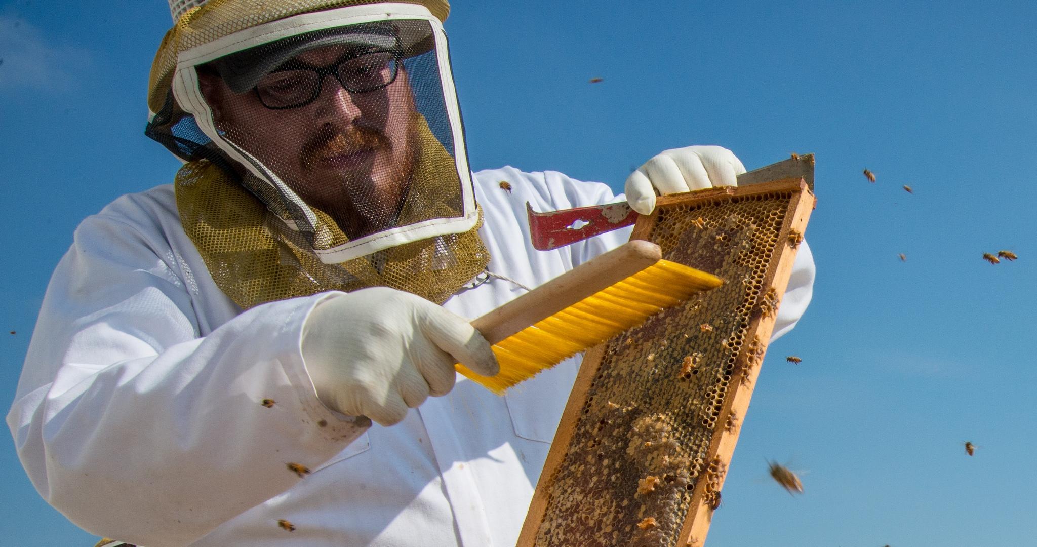 U S  honey industry contributes more than $4 7 billion to economy