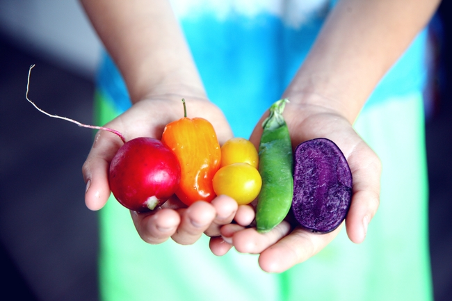 Hands holding vegetables, red turnip, orange, yellow, and green peppers, and purple beet.