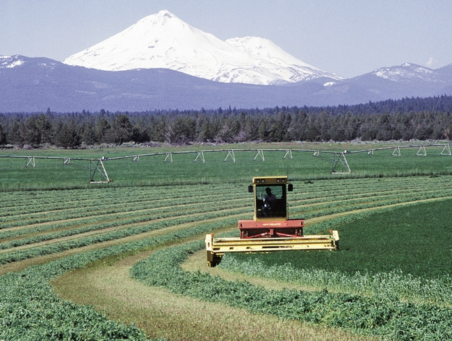 Alfalfa harvest horizontal
