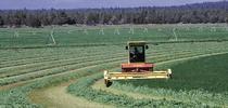Alfalfa harvest horizontal for Food Blog Blog