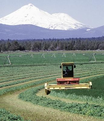 Western Alfalfa & Forage Symposium to meet in Reno Nov. 19-21
