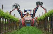 Mechanical removal of winegrape shoots can reduce the amount of hand labor needed for vineyard management. Photo by Kaan Kurtural