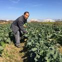 Michael Yang examines broccoli rabe, one of about 200 crops grown by the Hmong farmers he advises.
