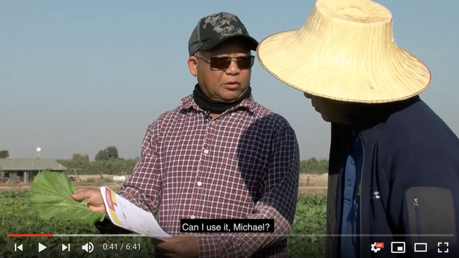 Yang and Dahlquist-Willard partnered with California State University Fresno to produce a video series for the California Department of Pesticide Regulation to help growers understand pesticide regulations and safety..