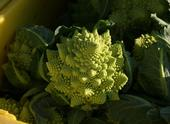 Romanesco cauliflower is one of the more unusual cruciferous vegetables.