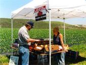 U-pick tent at Swanton Berry Farm