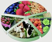 New report examines the impact of the coronavirus pandemic on food system and what the future holds for California's cattle, dairy, produce, strawberry, tomato, nut and wine industries.