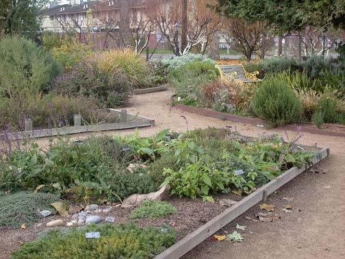 herb garden rays