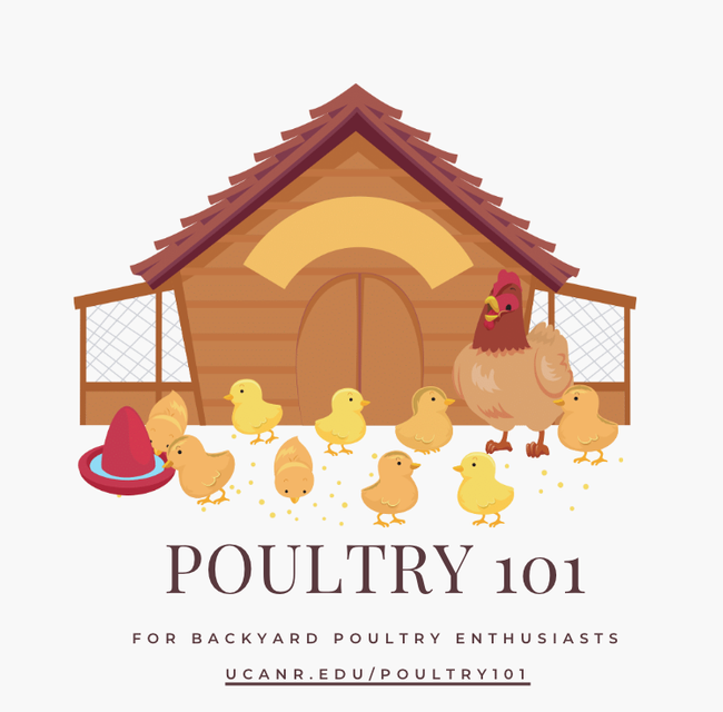 poultry 101 cropped full