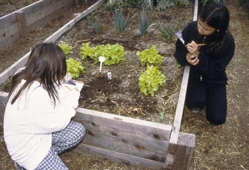 Students record plant growth in a school garden.