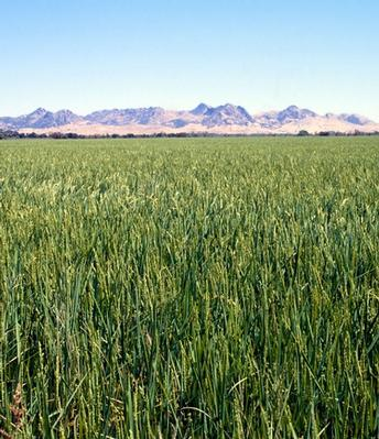 Report finds 10 to 1 return on investment in international agricultural research