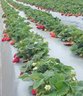 Organic agriculture tops $3 billion in California farm gate sales