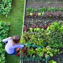 Gardens provide many benefits to individuals, families and communities.