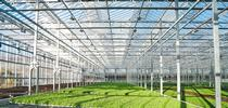 Gotham Greens is building a state-of-the-art greenhouse near UC Davis and partnering with UC ANR and UC Davis to advance research and innovation in indoor agriculture, greenhouse technology and urban agriculture. Photo courtesy of Gotham Greens for Food Blog Blog
