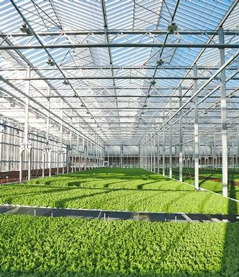 UC partners with Gotham Greens to advance indoor agriculture