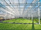 Gotham Greens is building a state-of-the-art greenhouse near UC Davis and partnering with UC ANR and UC Davis to advance research and innovation in indoor agriculture, greenhouse technology and urban agriculture. Photo courtesy of Gotham Greens