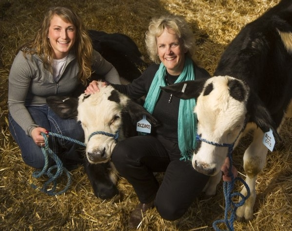 Graduate student Lindsay Upperman, left, and UCCE specialist Alison Van Eenennaam pose with two gene-edited hornless dairy calves at UC Davis. Photo by Karin Higgins