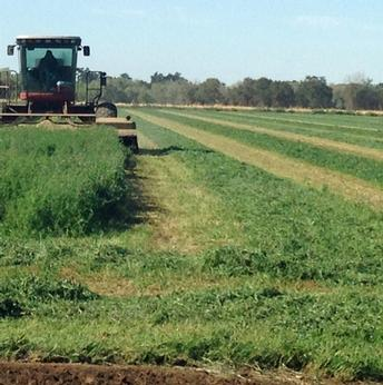 Organic alfalfa hay cost study released