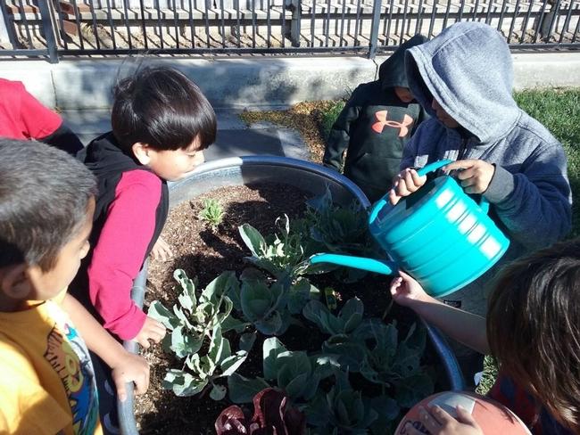 A group of kids water their school garden.