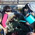 A group of kids water their school garden.