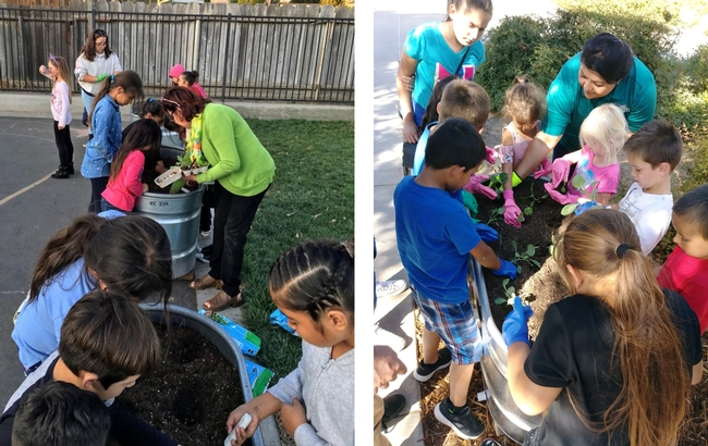Planting day at the Ceres school farm.