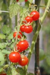 veggi and fruit 044 (2)