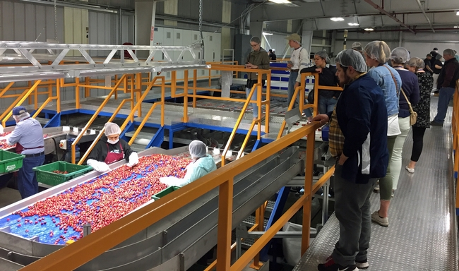 In the spring, GFI fellows gather to network. During the 2017 GFI fellows spring tour, students observed cherry sorting.