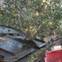 A standard trunk-shaking harvester.