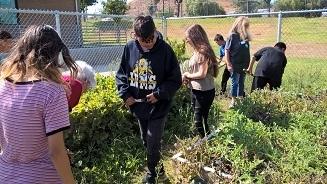 UC Master Gardener volunteers work with Alvord Unified School District's garden club students