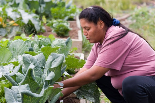 Micro-farms, backyard chickens, bee keeping and raw food markets are popular forms of urban agriculture.