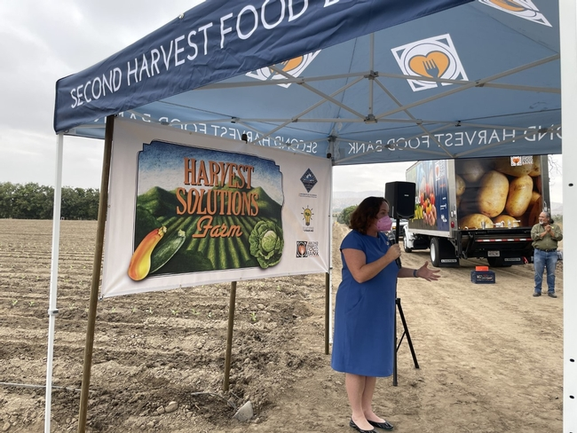 Katie Porter, wearing a royal blue dress and pink face mask, speaks into a microphone while standing at the edge of a cabbage field under a Second Harvest Food Bank shade canopy in front of a banner that reads: Harvest Solutions Farm.