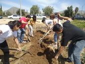 UCR undergraduates work in the community garden.