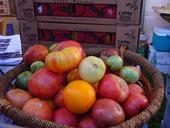 Heirloom tomato cultivars - which can be found in a wide variety of colors, shapes, flavors and sizes - may not be practical for commercial production, but add interest to home gardens.